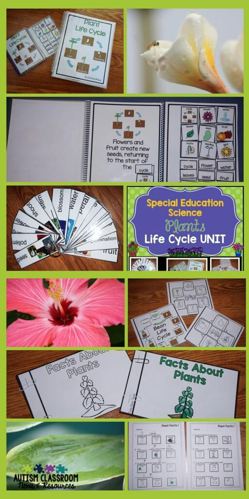 Lots of differentiated materials for teaching the plant life cycle in a special education classroom