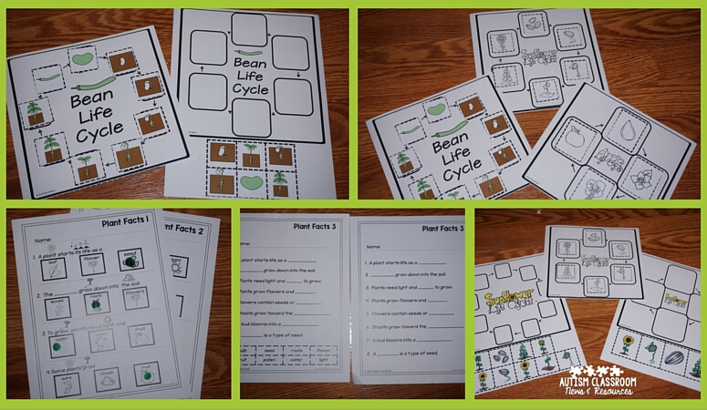 Workproduct materials for assessment for Plant Life Cycle Unit for Special Education